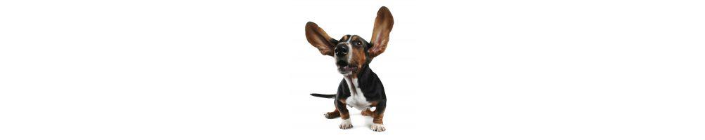 Nega ušes